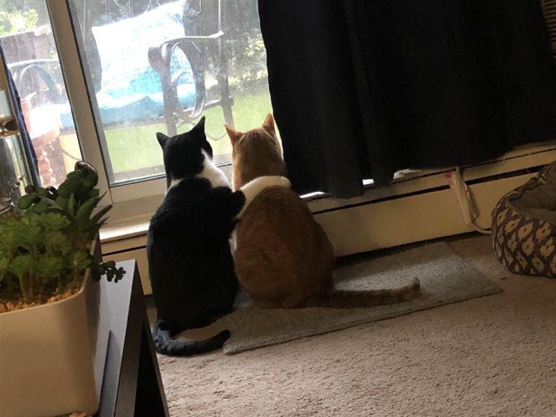 不打不相識的貓兄弟遇暴風雨來襲 奴才見超暖一幕秒融化