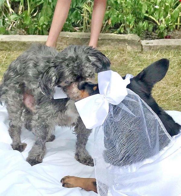 ▲珍妮佛一家人為托比和柔伊舉行盛大婚禮。(圖/Jennifer