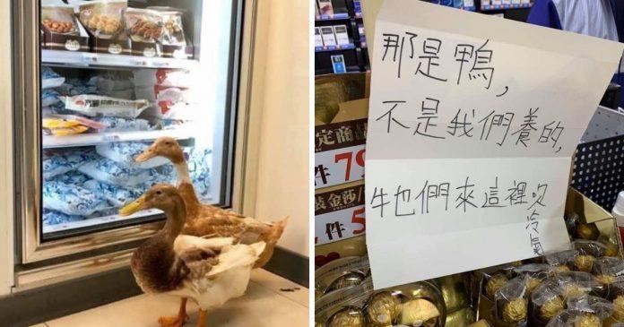 驚見鴨子逛超商 老外一看告示牌:這好台灣