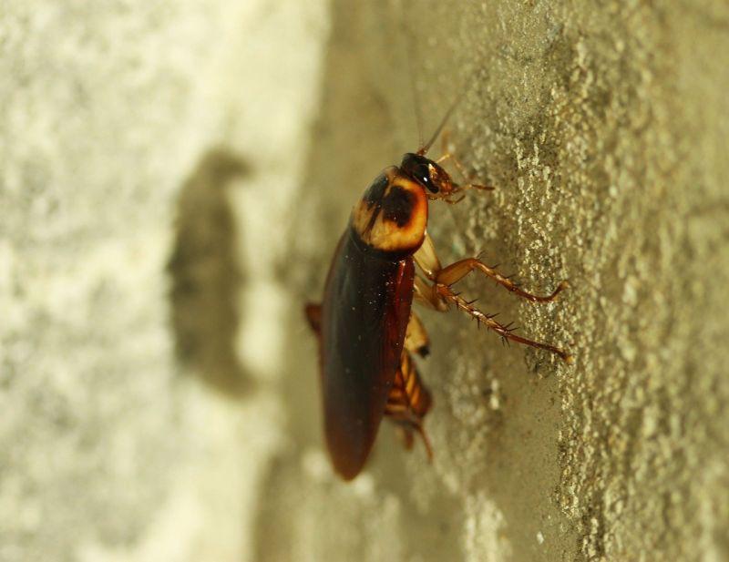 若看到蟑螂「大叫」會怎樣?悲慘結果曝光 網友全嚇呆