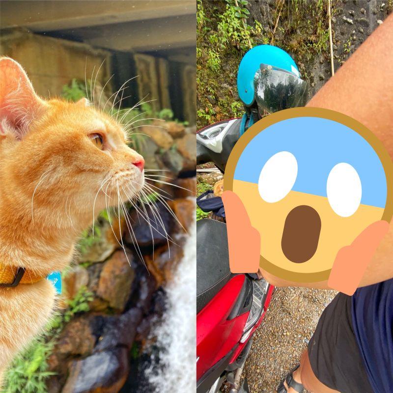 ▲網友分享,在跟自己的愛貓環島,過程中發生意外,但愛貓的行為卻救了她一命。(圖/翻攝自《Dcard》 )