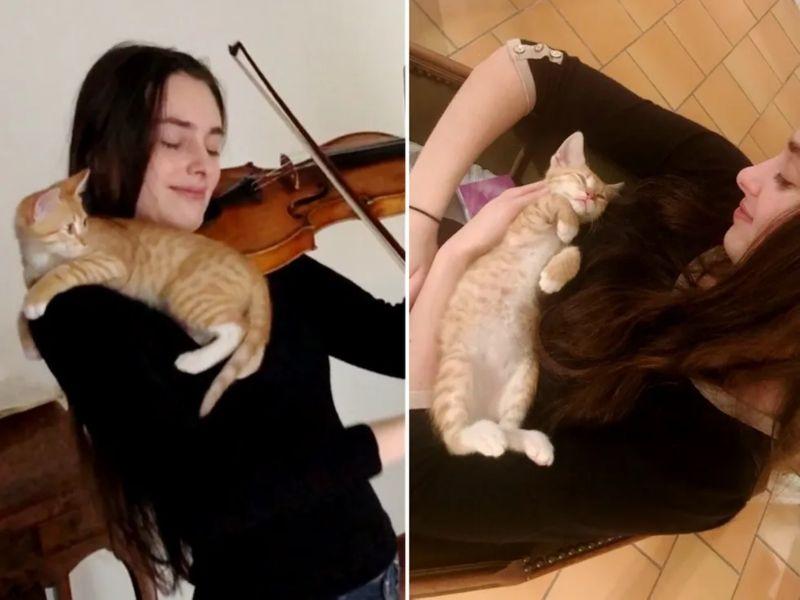 中途貓回家首日直闖練琴室 一聽樂音醉心蹭上:馬麻好棒!