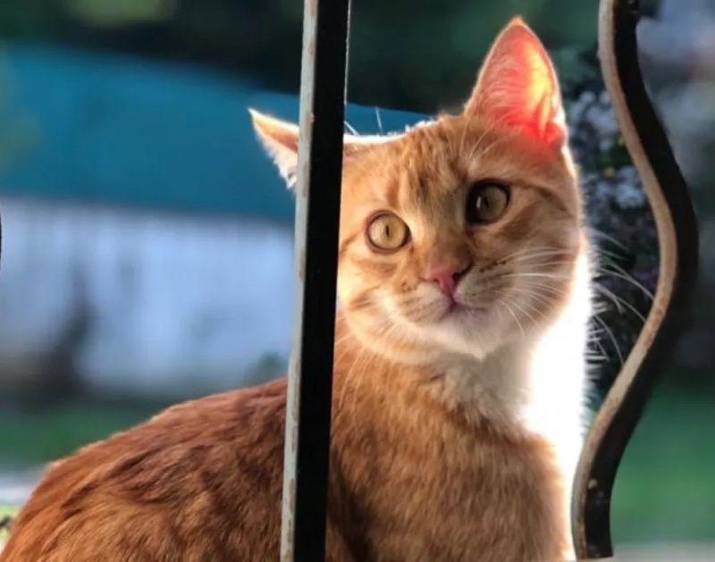 ▲現在已經長成美麗貓咪的小玫瑰花。(圖/Esther