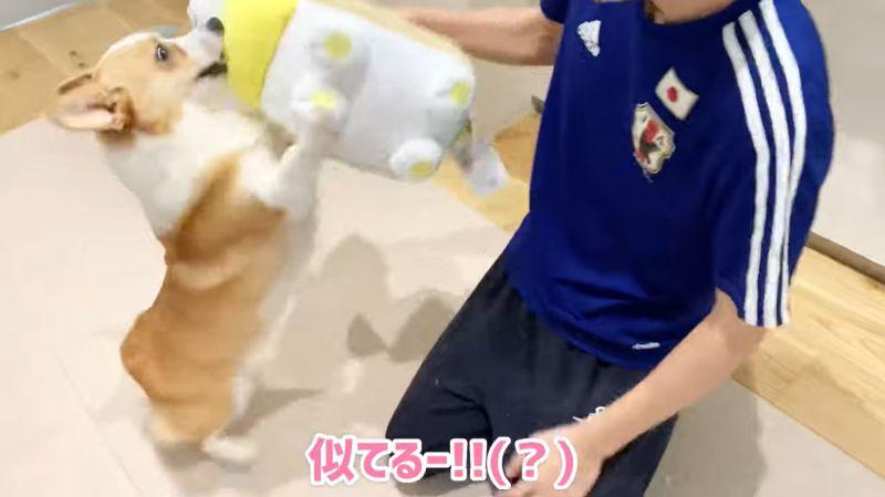 ▲咦~?這是蝦咪?(圖/翻攝自YouTube@コーギーむぎ)