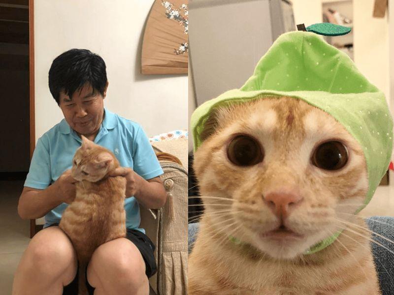 影/阿公嘴上才說:不喜歡貓 轉身卻親做玩具送金孫橘貓