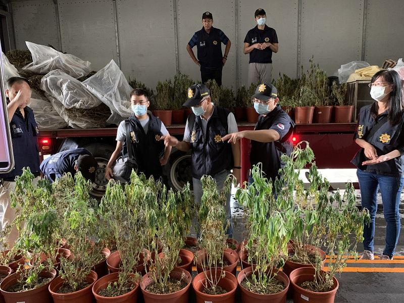 南投農家子弟種大麻1361株 使用「焙茶乾燥機」量產