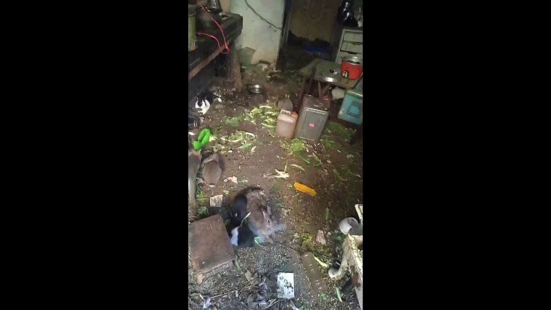 影/獨居老人養100多兔 鄰居投訴卻無單位願處理
