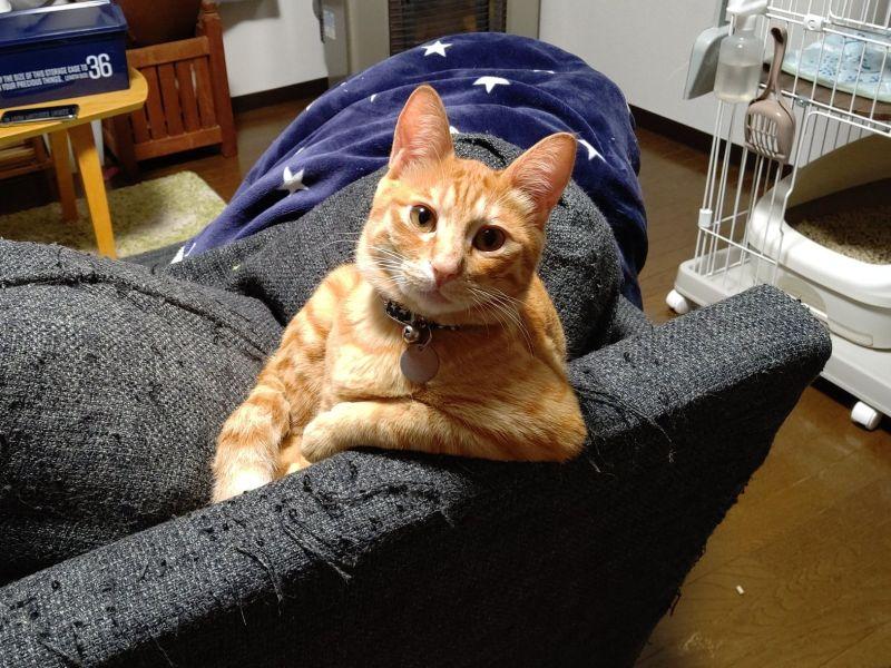 ▲日本一名推主回家時,驚見橘貓手單手饋著沙發看著自己(圖/twitter@T_REX_RED_Tiger)