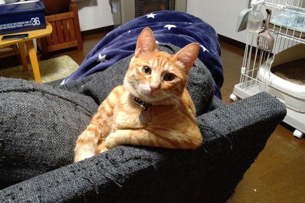 ▲日前牠單手饋在沙發椅背上,看著剛回到家的推主……(圖/twitter@T_REX_RED_Tiger)