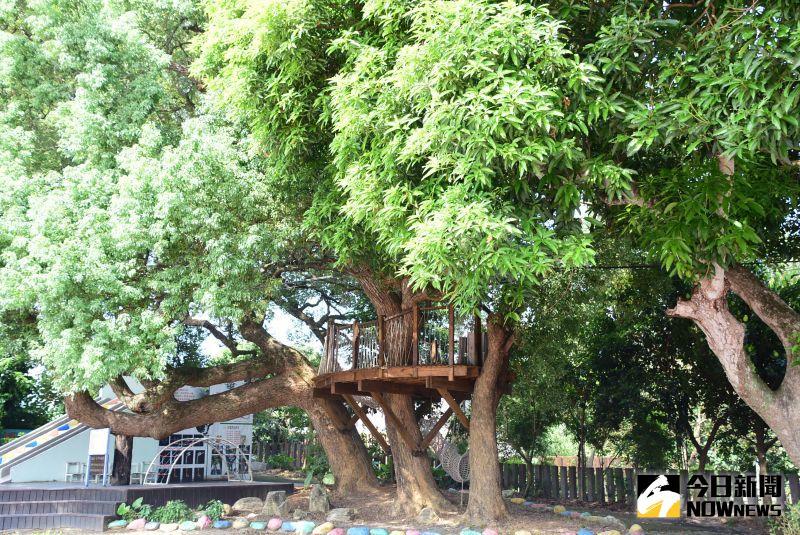 ▲芬園鄉同安國小校園還有樹屋。(圖/記者陳雅芳攝,2020.09.01)