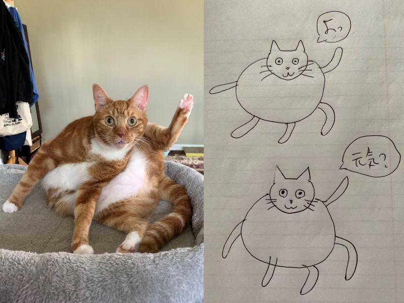 橘白貓抬腳定格成<b>謎樣</b>形體 網友笑:奇怪的姿勢又增加!