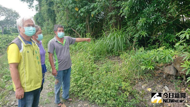 ▲榮光村面積約二分地的樹林,長年堆積廢棄輪胎。(圖/記者陳雅芳攝,2020.09.03)