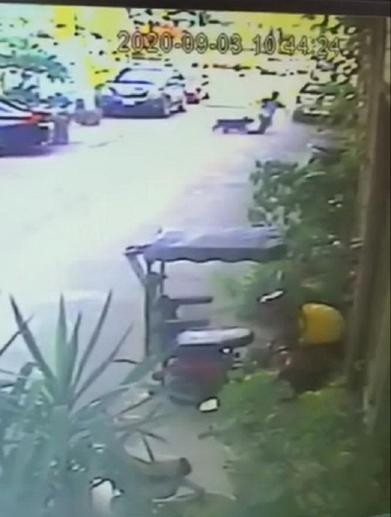 2隻比特犬圍攻追咬民眾 3人慘遭利牙撕咬