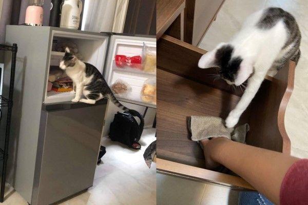 ▲清冰箱、擦櫃子也不假他人之手(圖/網友Ivy