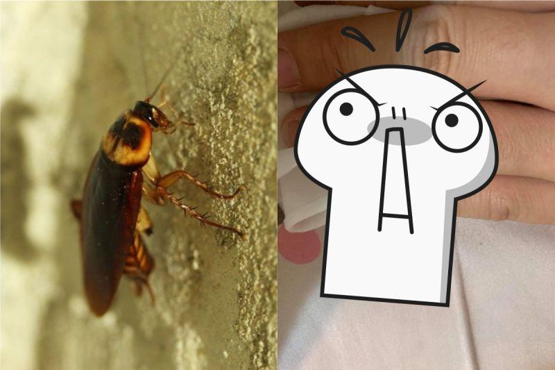 女兒遇<b>蟑螂</b>狂慘叫!媽飛撲「一招」秒殺 人夫跪在地上了