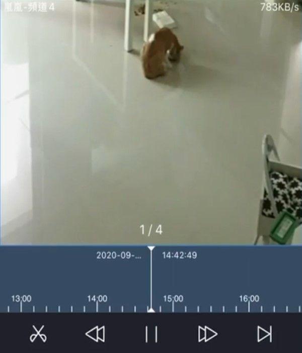 ▲柯小姐調閱監視器,發現兇手就是星星!(圖/網友柯泥泥授權提供)