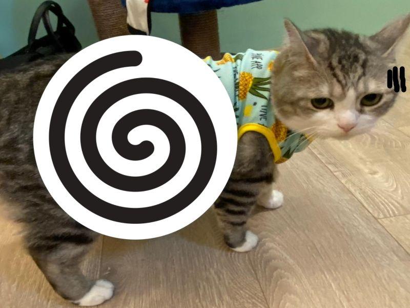 給貓咪買衣服發現「全部有<b>瑕疵</b>」 往下一看網友全笑瘋!