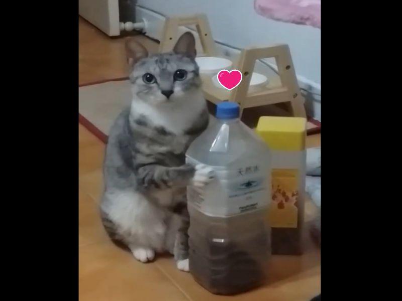 影/<b>貓咪</b>睜大萌眼搖罐討乾乾 助網友走出人生低潮!