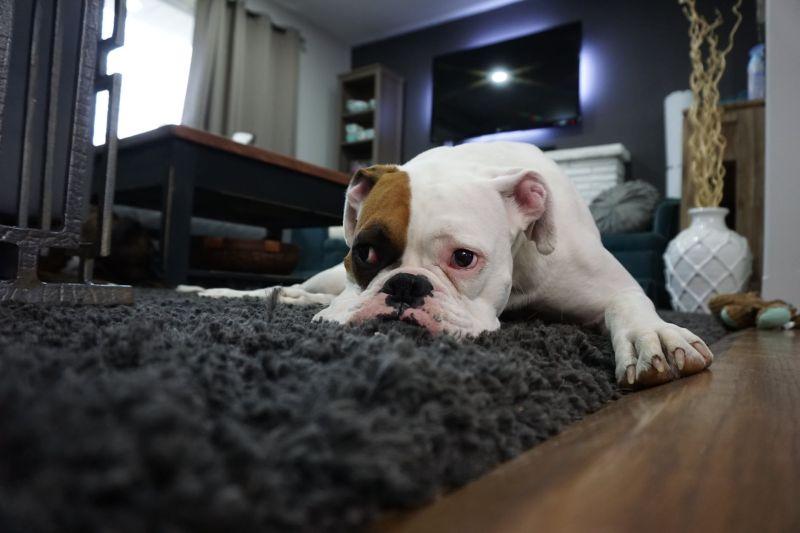 「帶狗住旅店」被要清潔費!他深夜一招拒付 店員爆氣