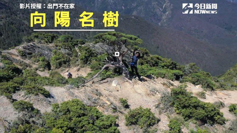 ▲「向陽名樹」為前往嘉明湖路途中的必經地點。(圖/出門不在家 授權)