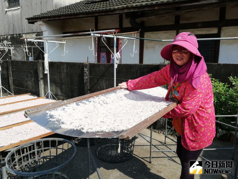 ▲藕農鄧素玉堅持產製純正藕粉,承認每個細節都很龜毛。(圖/記者邱嘉琪攝)