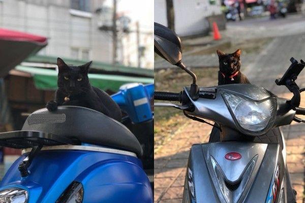 ▲黑貓「粉粿」是陳小姐友人的貓咪,認為所有東西都是牠的,主人的藍色摩托車是牠休息的地方,連陳小姐的車也是,因此日前她上班時被牠霸占車,還「硬脆硬擠」狂回嘴(圖/網友陳底迪授權提供)