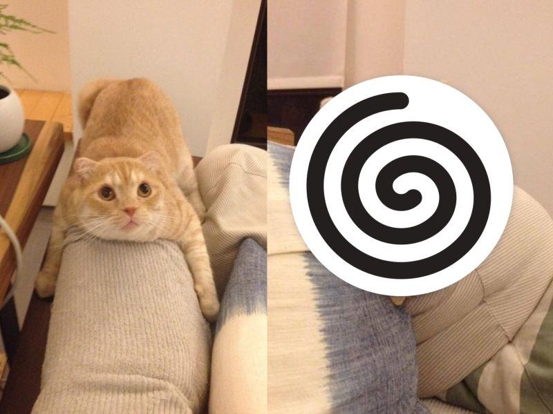 奶油貓抱沙發太久 奴才<b>翻身</b>竟成「ㄇ字型」網笑:脫模?