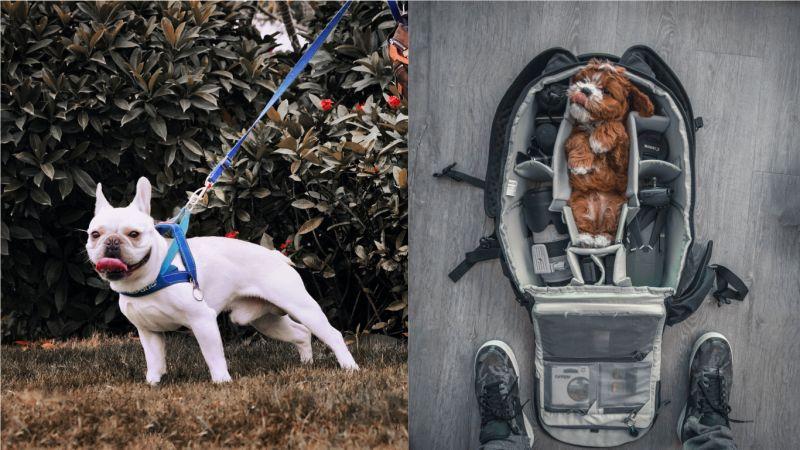路上常見狗狗被放在推車? 飼主揭「1關鍵」:真的有必要