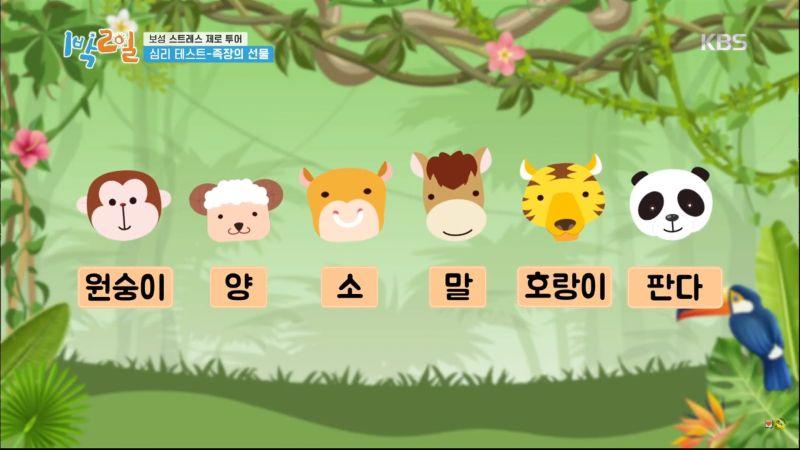 韓國爆紅<b>心理測驗</b>!直覺選一隻動物 測你的「壓力來源」