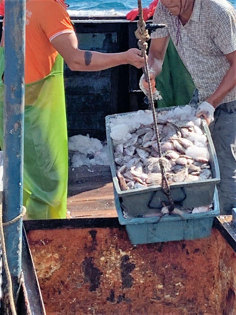 ▲「閩東漁64578」船上起出3000公斤的漁獲,無牛、豬肉相關製品,人員均無發燒情形。(圖/澎湖海巡隊提供)