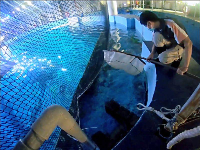 ▲ 「魚你同行」可讓民眾近距離瞭解海生館魚類的照護和繁殖復育,甚至親手餵食魚兒。(圖/海生館提供)