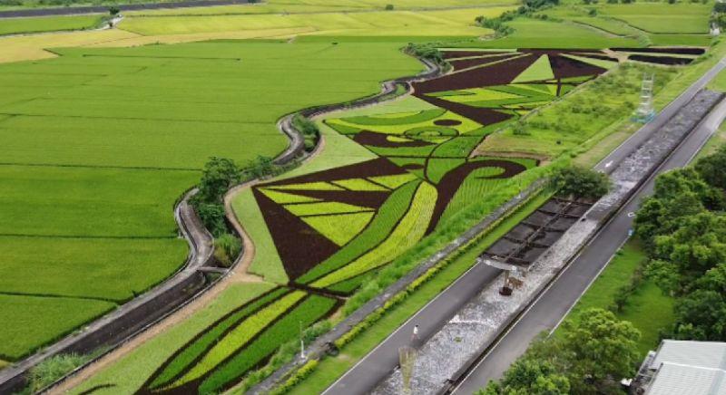 彩繪稻(圖|翻攝自影片)