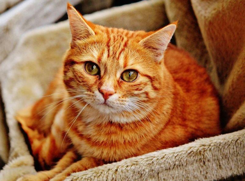 ▲網友認為,貓、狗會調節自身的溫度,那為何總是友人幫她們穿衣?(示意圖/翻攝自《pixabay》