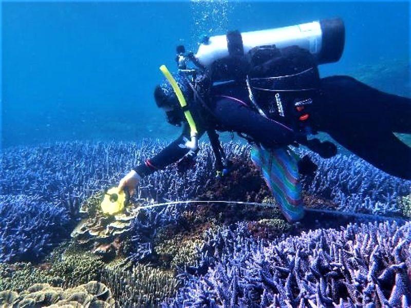 ▲2020年很有可能成為歷史上最熱的一年,東沙環礁與南方四島海域皆面臨極高的珊瑚白化風險。(圖/海管處提供)