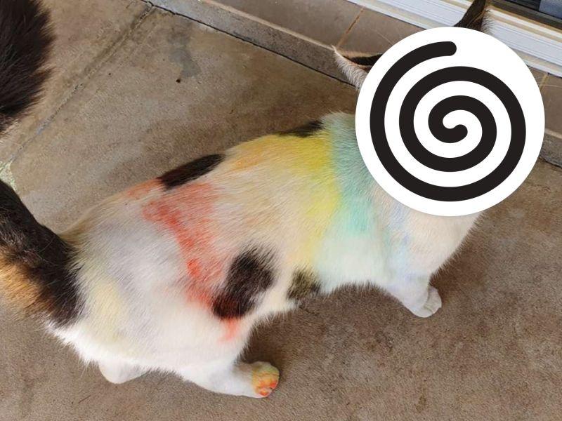 <b>黑白貓</b>變身「彩虹喵」 奴才崩潰牠卻喵叫:我好美!