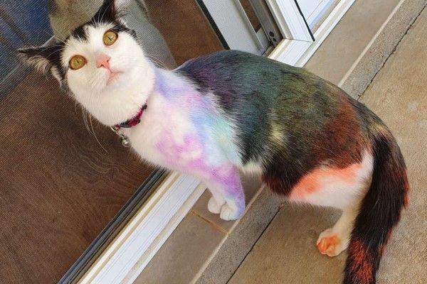 ▲回家的時候貓咪竟然變成彩虹貓!(圖/Rodger
