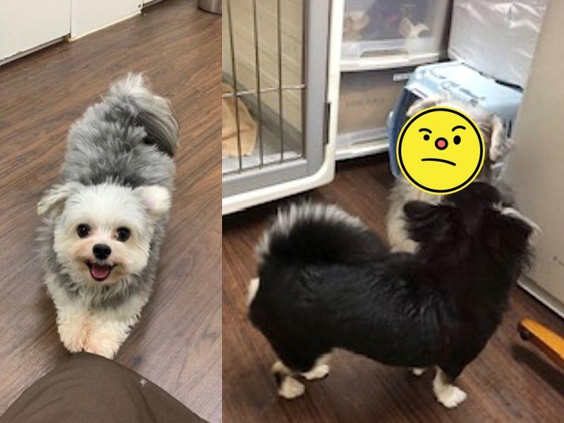 愛犬總是笑臉迎人 一進寵物旅館卻瞬間變隻狗