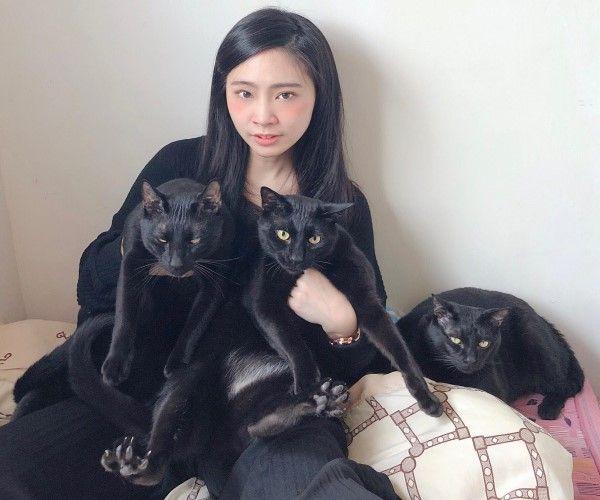 ▲網友杜酸表示三隻貓咪感情很好隨時都膩在一起(圖/網友杜酸授權提供)