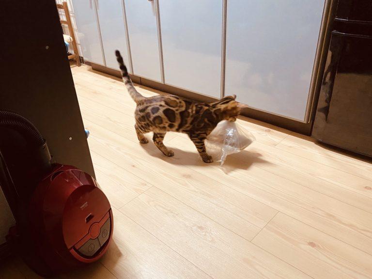 ▲主人放下從超市採買回家的食物,沒想到一轉眼就看見貓小偷(圖/Twitter@rFfSIsl1TH5QAw8)