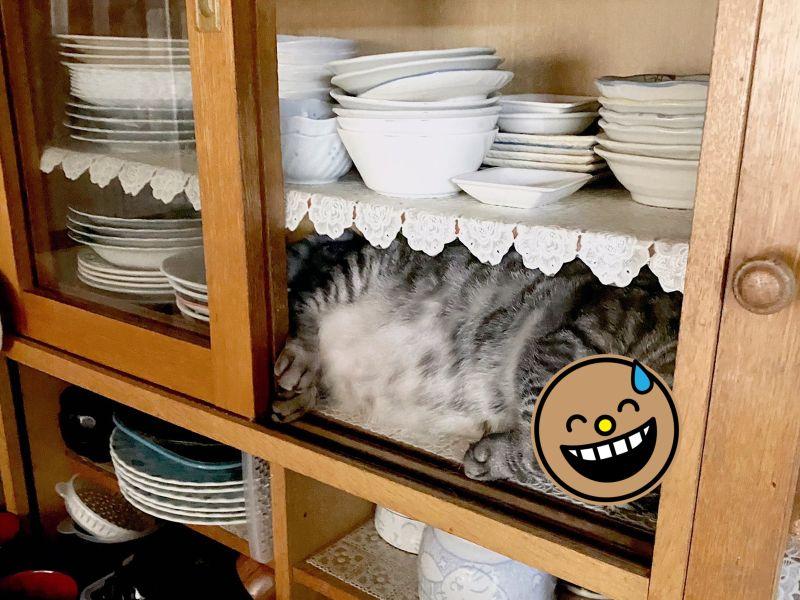 一名主人想吃冰淇淋走進廚房,意識到不對勁時竟發現碗盤櫃長出貓來。(圖/Twitter@nezy55)