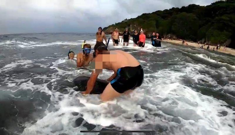 正義姐挺身<b>制止</b>遊客玩海龜遭回嗆 海巡找到嫌疑人法辦