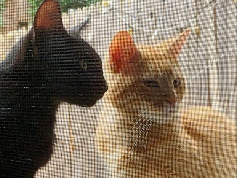 2浪貓自主來到女子家 沒多久竟誕下新生奶貓