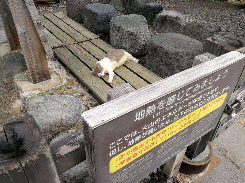 日本推主來到溫泉勝地,竟看見浪貓爽爽趴在體驗地熱區!(圖/Twitter@hika_eki)