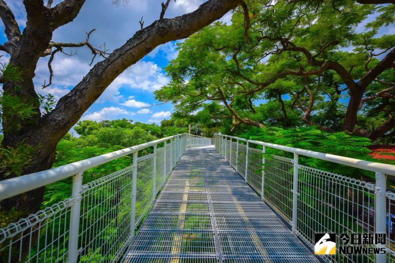 ▲彰化市八卦山天空步道,傍著林梢像走在森林上。(圖/記者陳雅芳攝,2020.10.07)