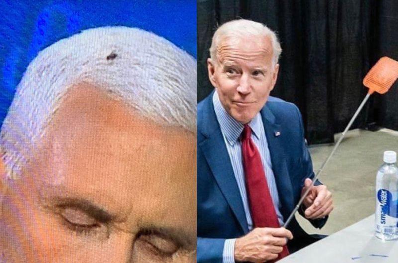 美選辯論最大「蠅」家?牠黏彭斯白髮爆紅 連拜登也服輸