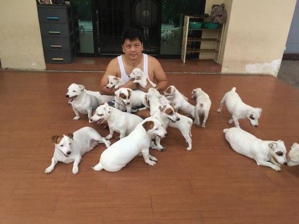 ▲爸爸對傑克羅素㹴犬特別有愛。(圖/Facebook@หมาวัดหลวง)