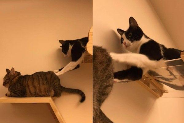 ▲蔡小姐養了三隻貓咪,就屬飯糰最調皮(圖/粉專蔡小姐的貓授權提供)