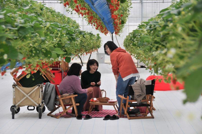 ▲空中草莓園也是一處網美的景點。