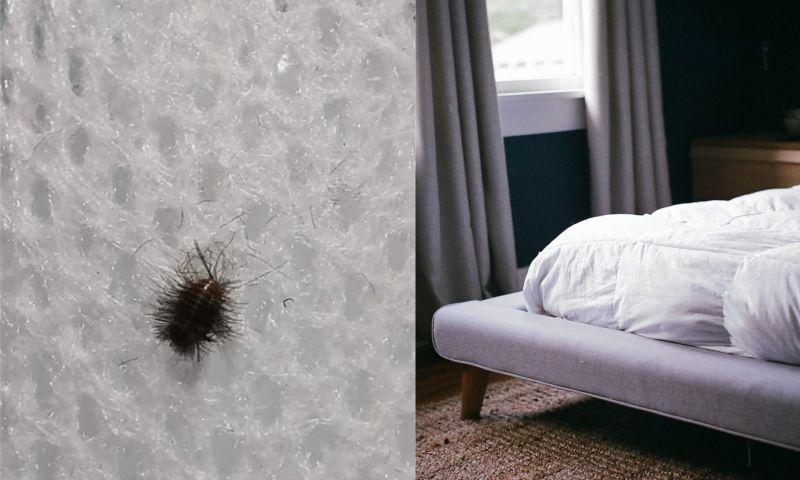 ▲一名男網友在《爆系知識家》發文,表示在床墊發現「黑毛蟲」。(左圖,翻攝自《爆系知識家》/右示意圖,與文章中內容無關,取自unsplash)