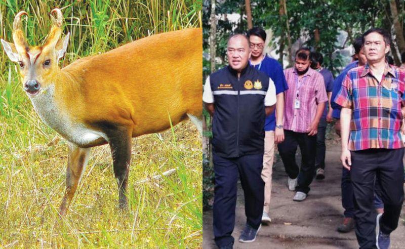 珍貴吠鹿失蹤竟引發喋血案!泰國動物園大領袖被射殺